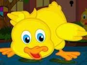 Cute Duckling Bird Escape