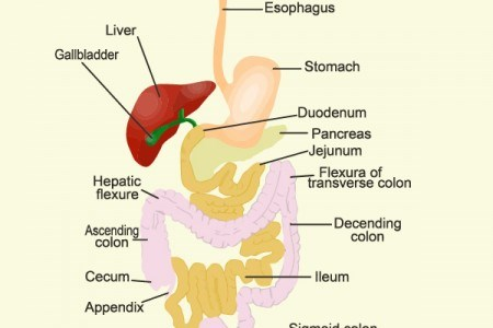 Digestion Game