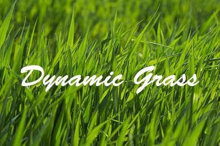 Dynamic Grass démo