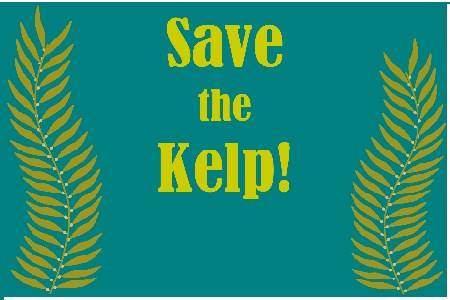 Save the Kelp